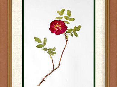 botany HERBARIA AND ITS USES IMPORTANCE OF HERBARIUM
