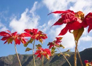 botany Euphorbiaceae