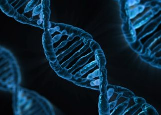 12th std biologyGene and genome