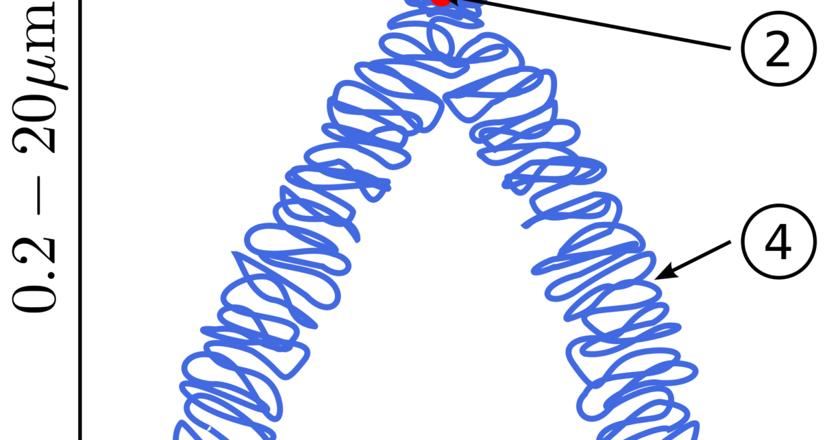 botany Chromosomal aberrations, Structural chromosomal aberrations