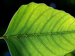 Plant physiology - photosynthesis and its significance