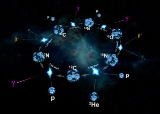 Dark Reaction biology