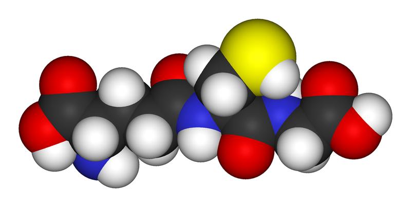 12 BIOLOGY BOTANY Mechanism of Respiration - Electron Transport Chain