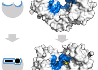 BOTANY Ganong's respiroscope, Pentose phosphate pathway