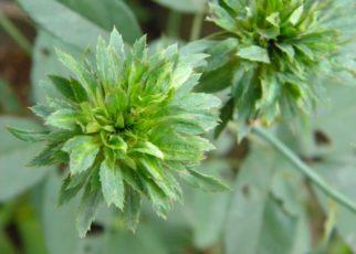 12 std botany Phytohormones Gibberellins
