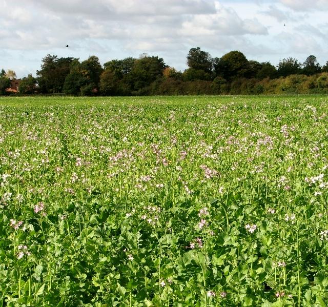 12th-standard-Green manures Mycorrhiza biofertilizer study-material-notes-book-botany-neet