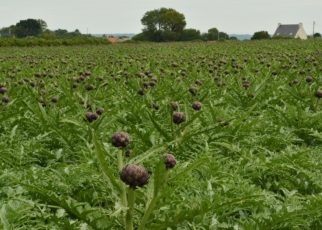 Crop diseases and their control
