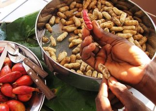 biologyGroundnut or peanut - Arachis hypogea Tikka disease of groundnut