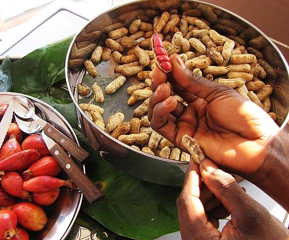 biologyGroundnut or peanut - Arachis hypogea Tikka disease of groundnut
