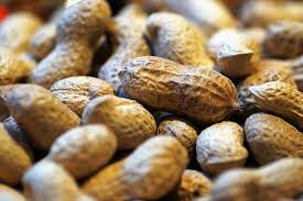 botany Oil plant – Groundnut